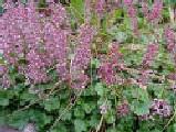 Descrizione delle piante da appartamento dalla g alla k for Un rampicante fiorifero